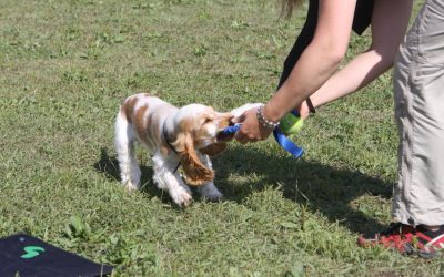 Is it okay to train a puppy? – #ThrowBackThursday