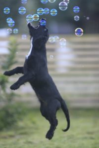 The opposite of flushing training; soap bubble hunting...