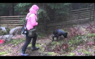 Being able to stop the dog while it's hunting