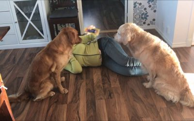 Can your dog really do what you ask it to do?