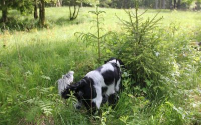 Training on your Walks – Hunting #ThrowBackThursday