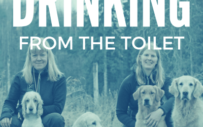 Interview with Hannah Brannigan on Drinking from the Toilet
